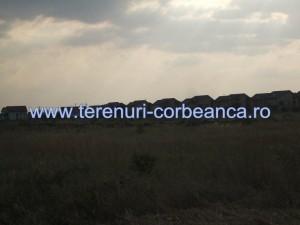 corbeanca forest1