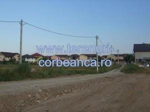 corbeanca forest2